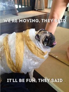 pug1 moving in? moving out? exceptional cleaning,Moving Out Meme